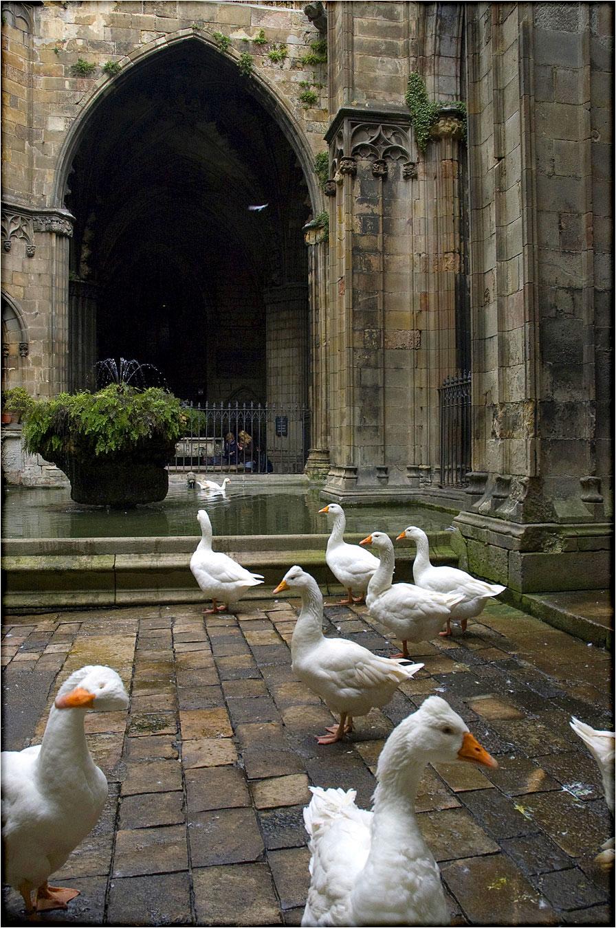 spanjemijnland | Kathedraal Barcelona