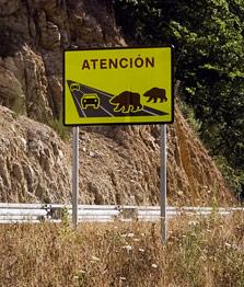 spanjemijnland | beren in Parque de Somiedo - Asturië