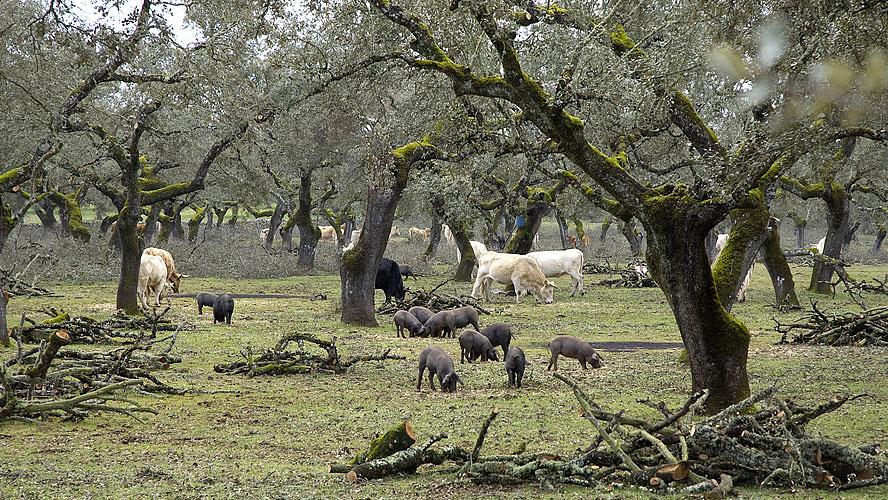 spanjemijnland   het zwarte goud van Extremadura