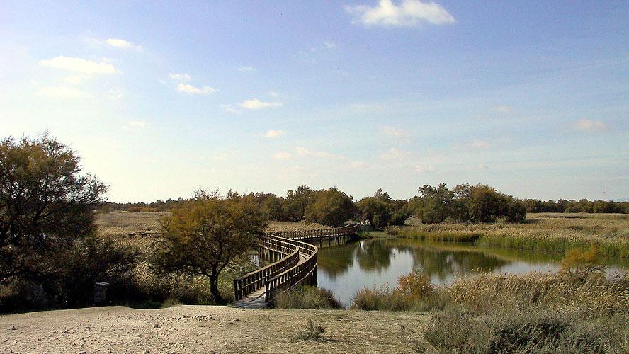 spanjemijnland | Parc Nacional Tablas de Daimiel