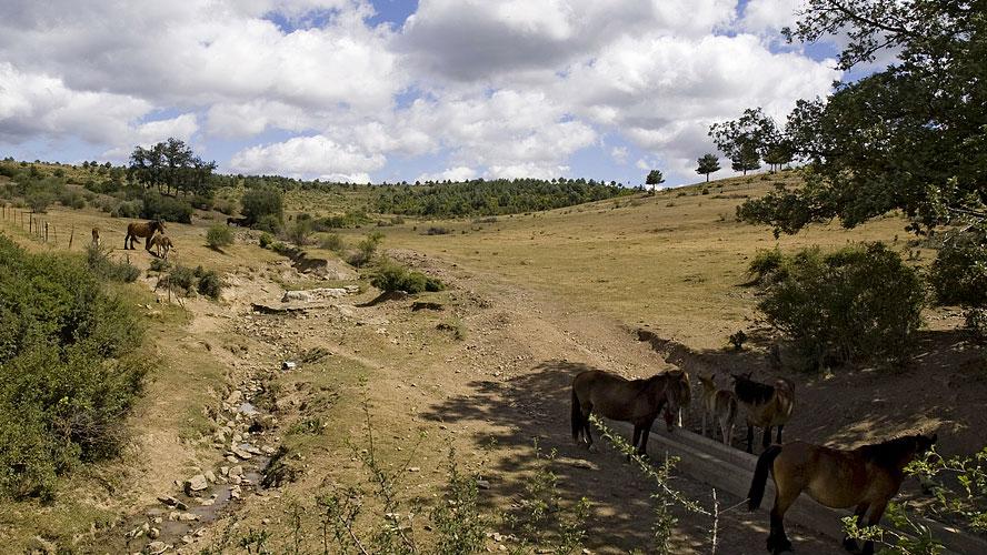 spanjemijnland | Parque Natural Sierra de Cebollera